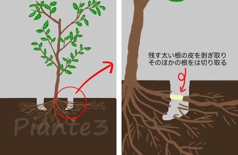 根回しで根を切る