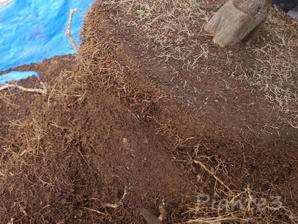根鉢をノコギリでカットした写真