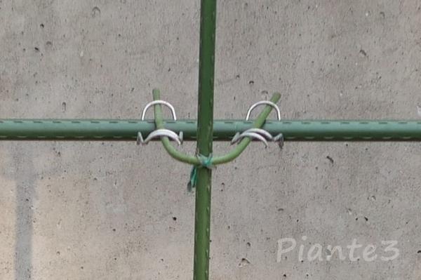 水平に固定したイボ竹に支柱を固定している写真