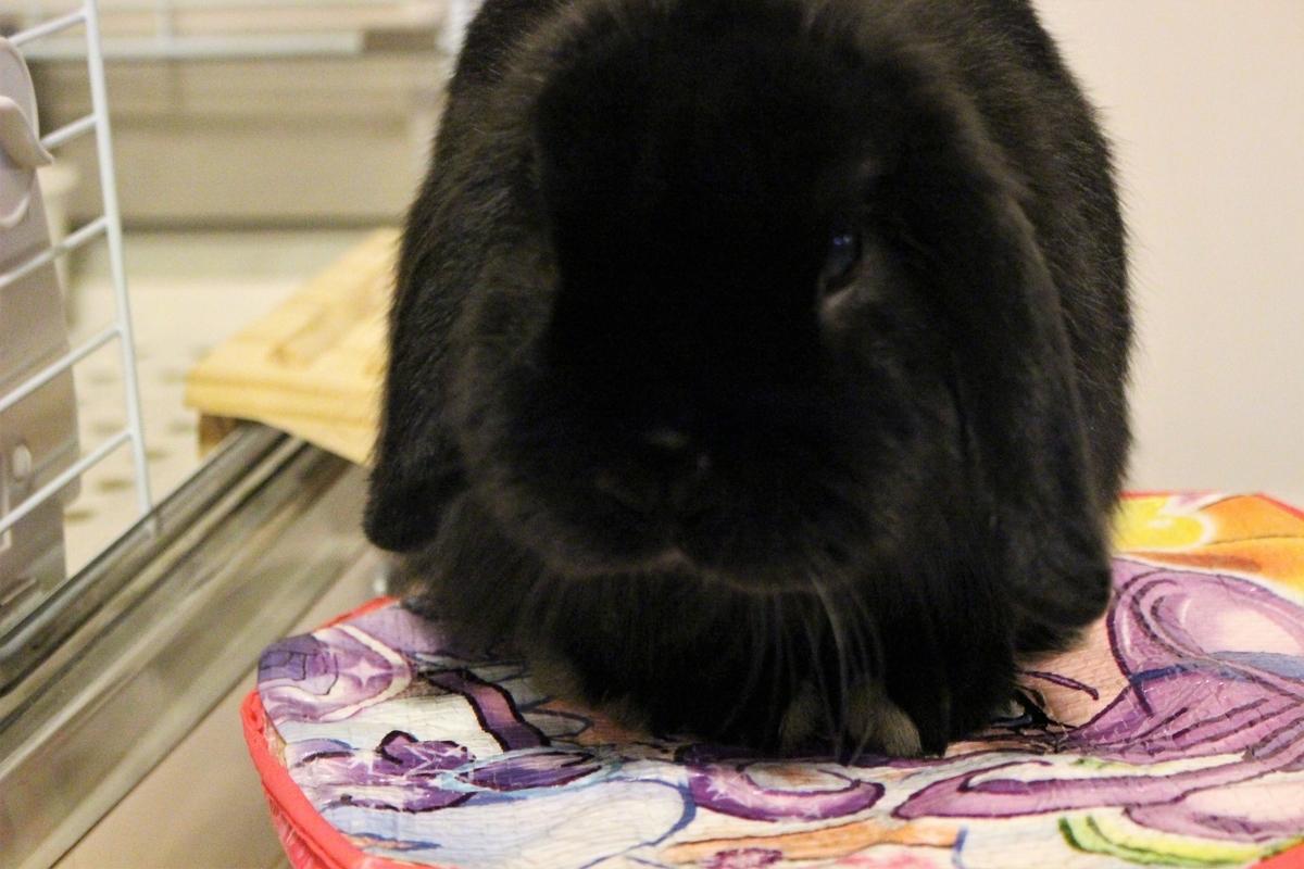 f:id:Ponz-rabbit:20190410203342j:plain