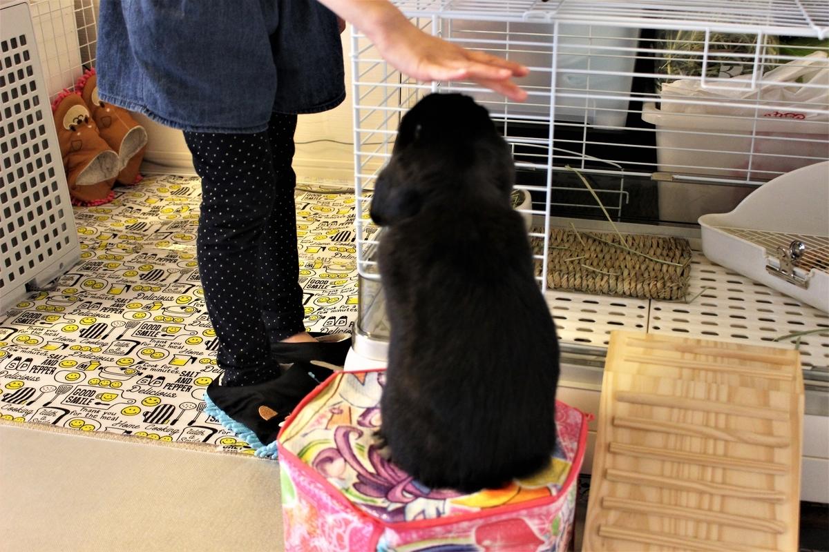 f:id:Ponz-rabbit:20190410205114j:plain