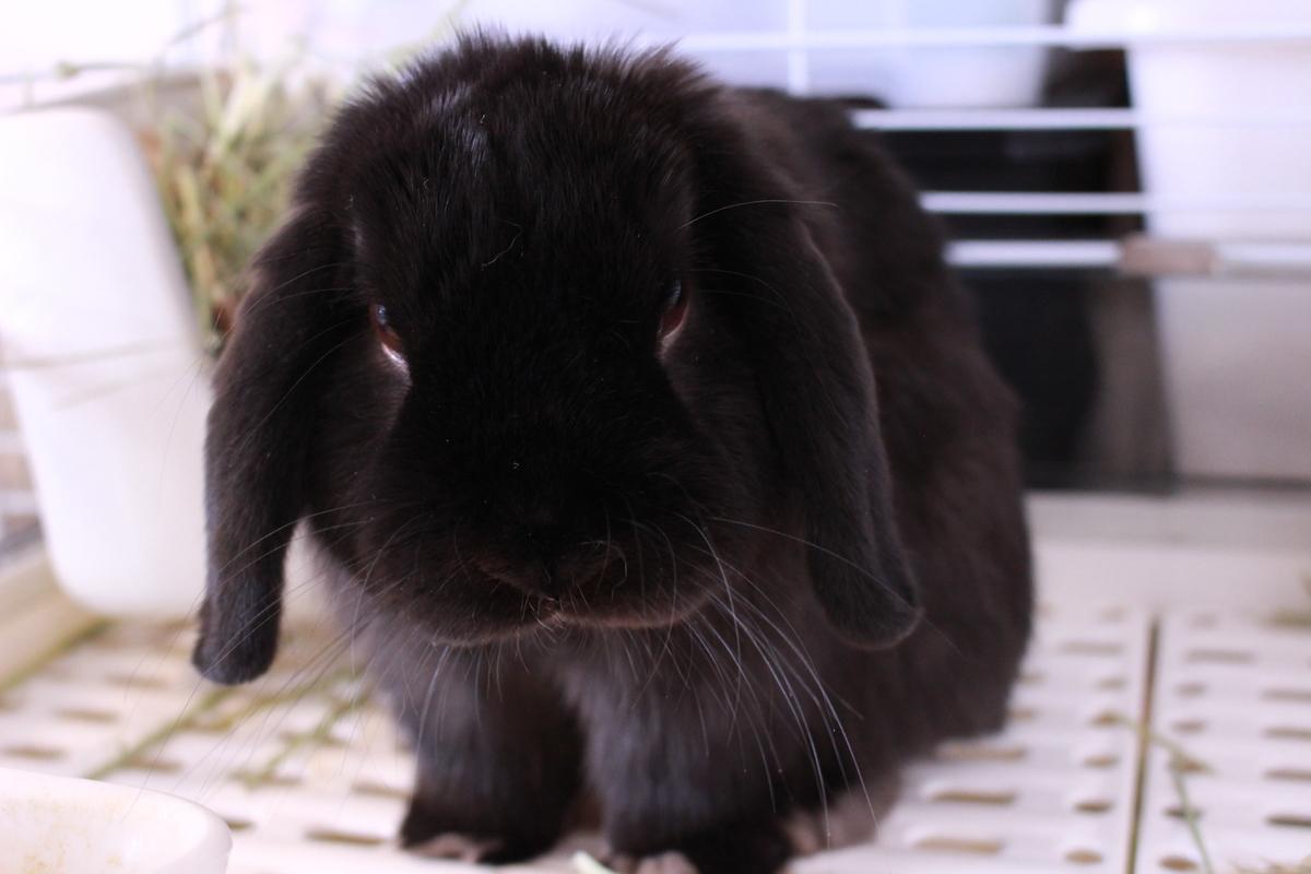 f:id:Ponz-rabbit:20190416195227j:plain