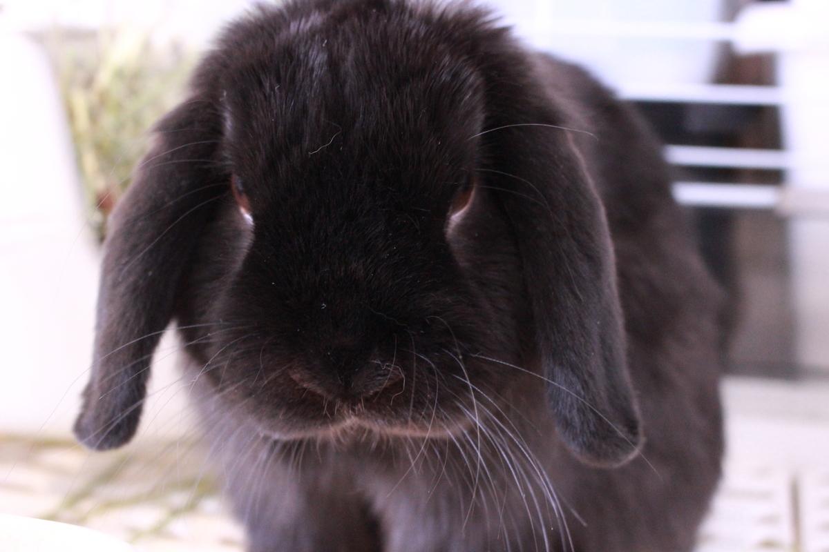 f:id:Ponz-rabbit:20190416195311j:plain