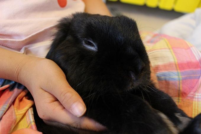 f:id:Ponz-rabbit:20190511223701j:plain