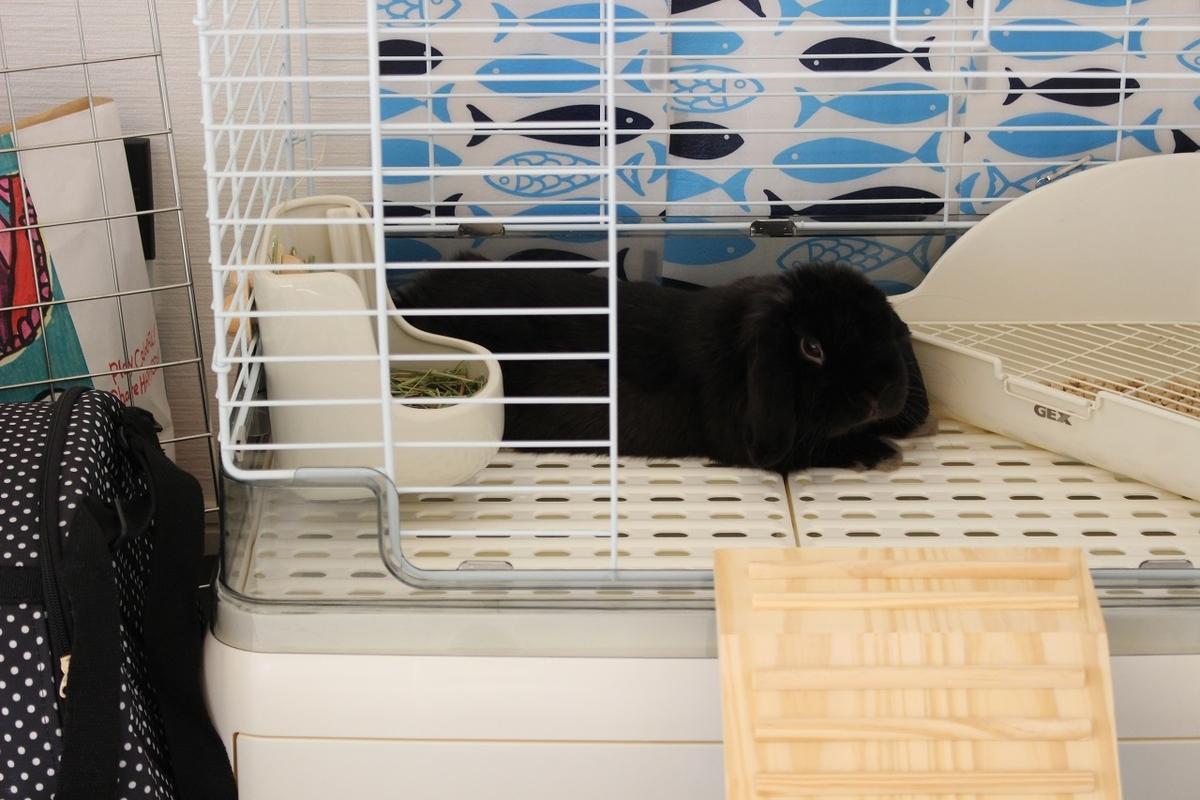 f:id:Ponz-rabbit:20190520222927j:plain