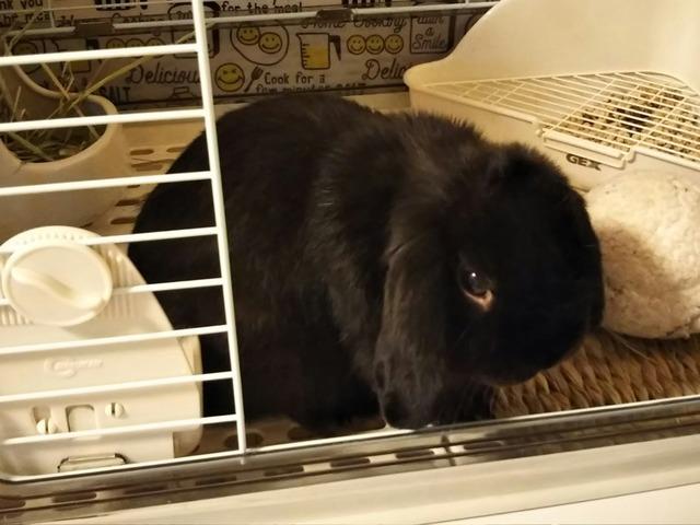 f:id:Ponz-rabbit:20190520224831j:plain