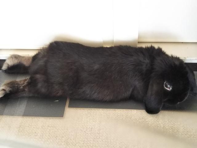 f:id:Ponz-rabbit:20190520225842j:plain