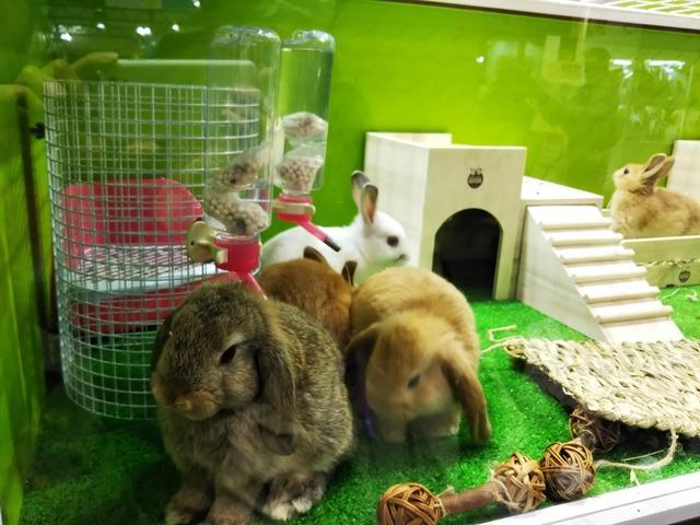 f:id:Ponz-rabbit:20190520230649j:plain