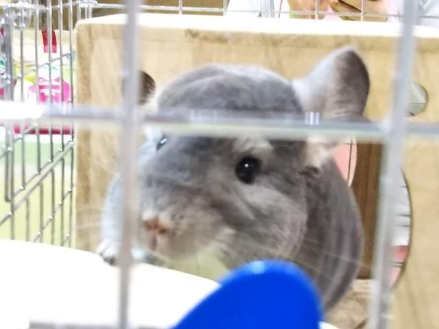 f:id:Ponz-rabbit:20190520231145j:plain