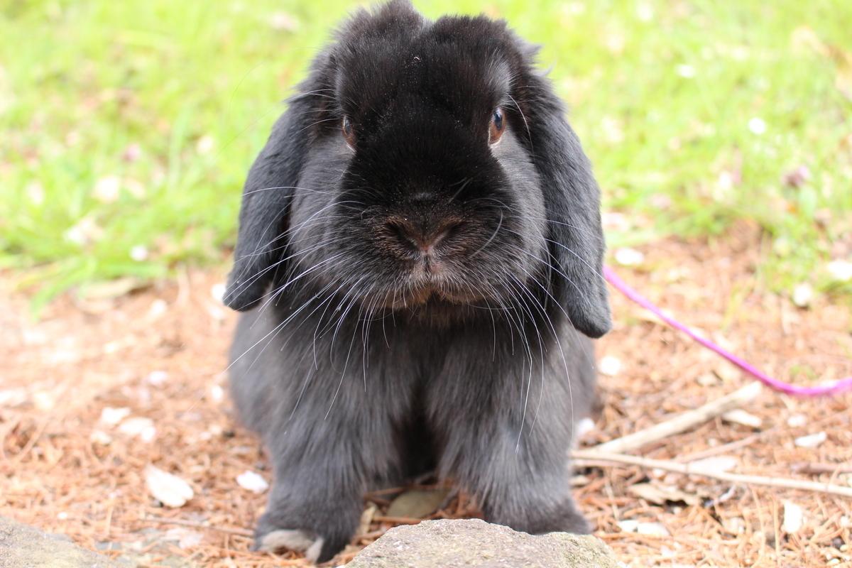 f:id:Ponz-rabbit:20190520232719j:plain