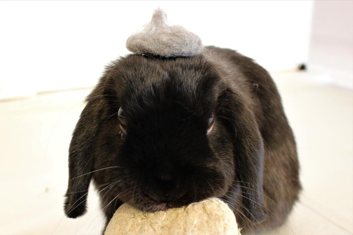 f:id:Ponz-rabbit:20190522224913j:plain