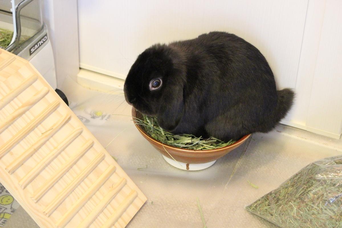 f:id:Ponz-rabbit:20190604220548j:plain