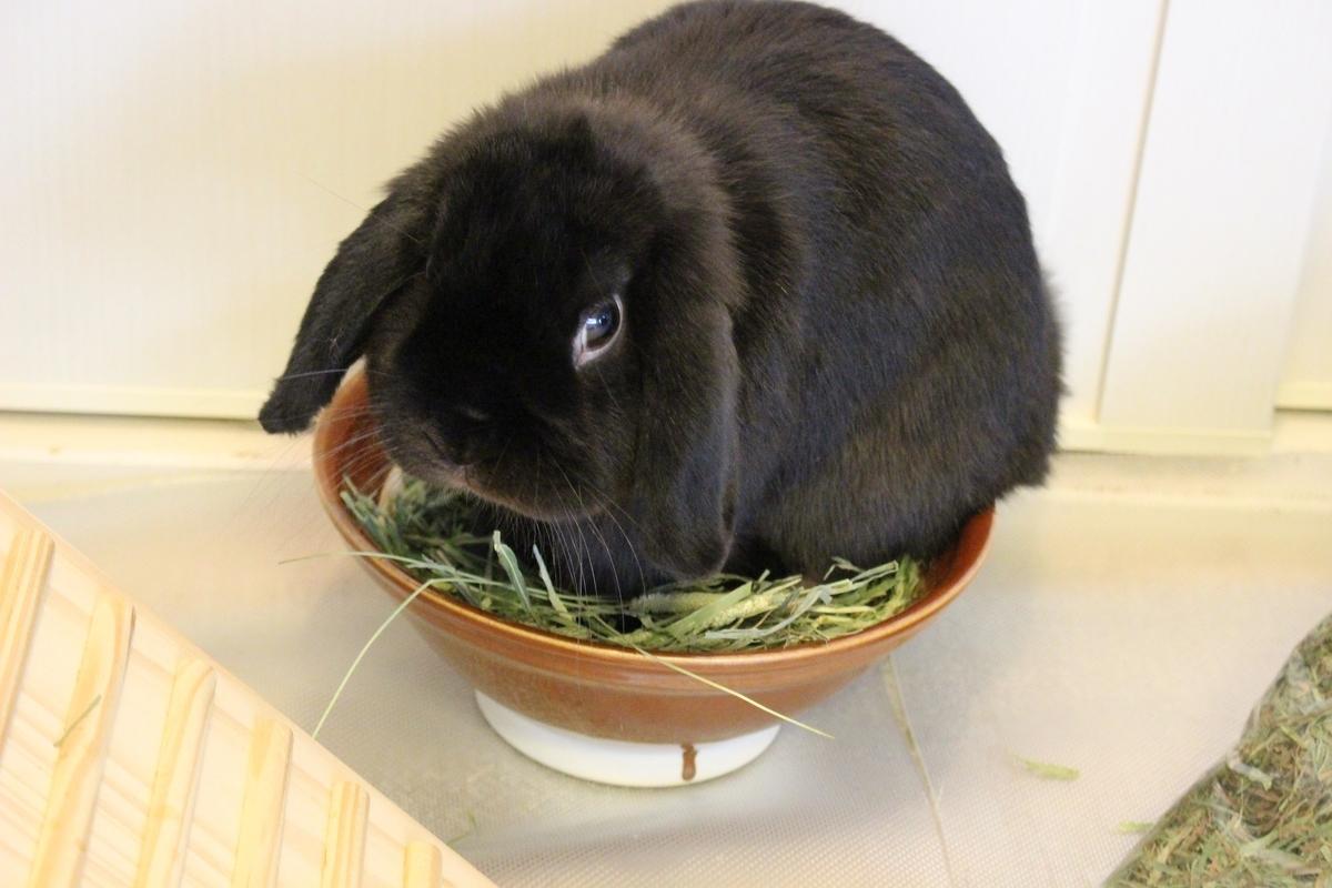 f:id:Ponz-rabbit:20190604220635j:plain