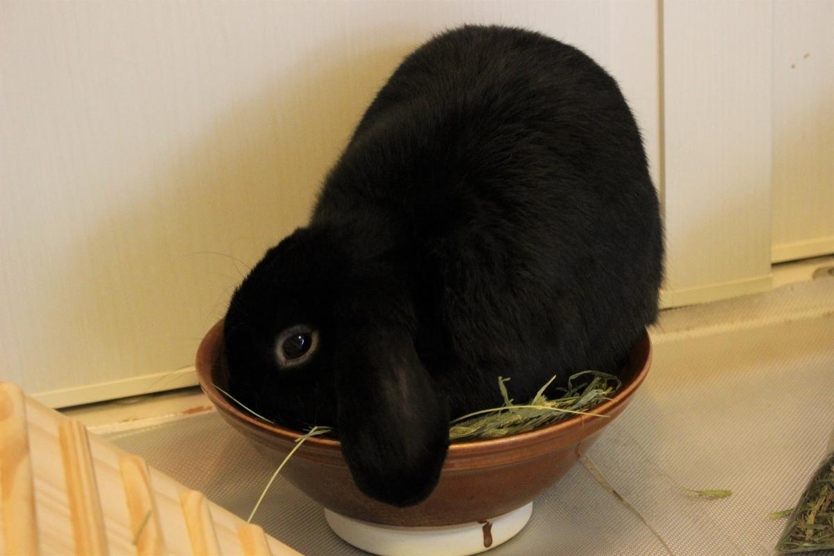 f:id:Ponz-rabbit:20190604220723j:plain