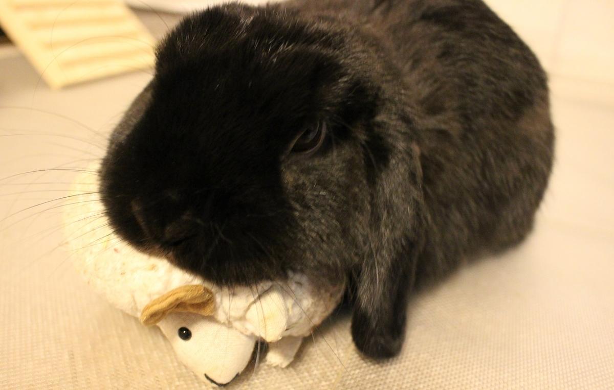 f:id:Ponz-rabbit:20190620223508j:plain