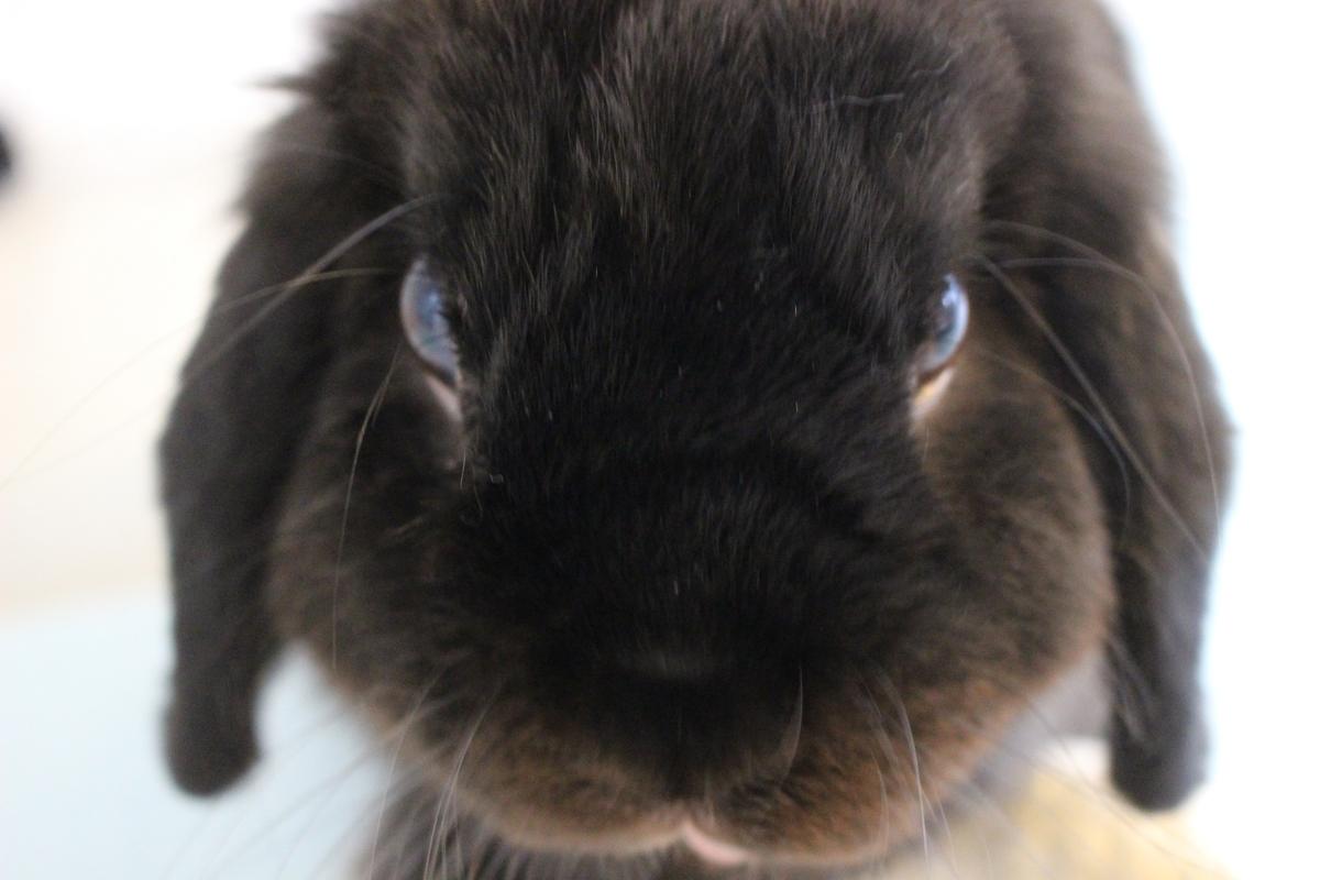 f:id:Ponz-rabbit:20190714190456j:plain