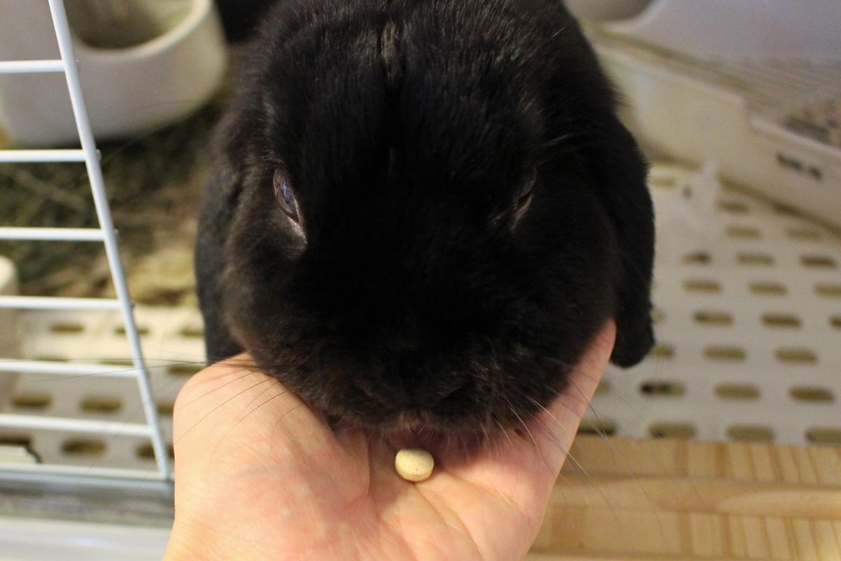f:id:Ponz-rabbit:20190714190917j:plain