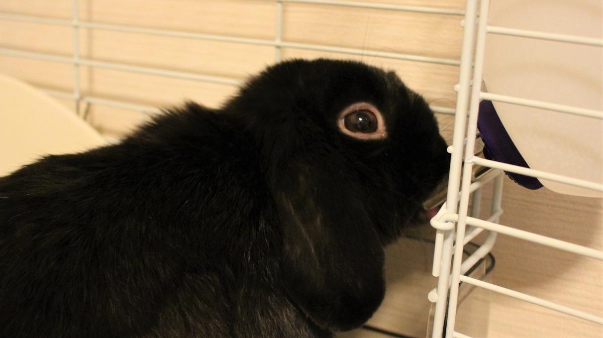 f:id:Ponz-rabbit:20190929214808j:plain