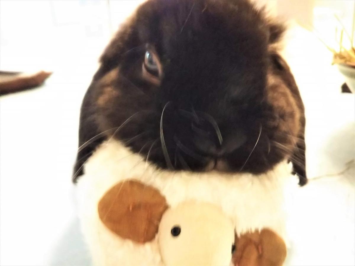 f:id:Ponz-rabbit:20191025212102j:plain