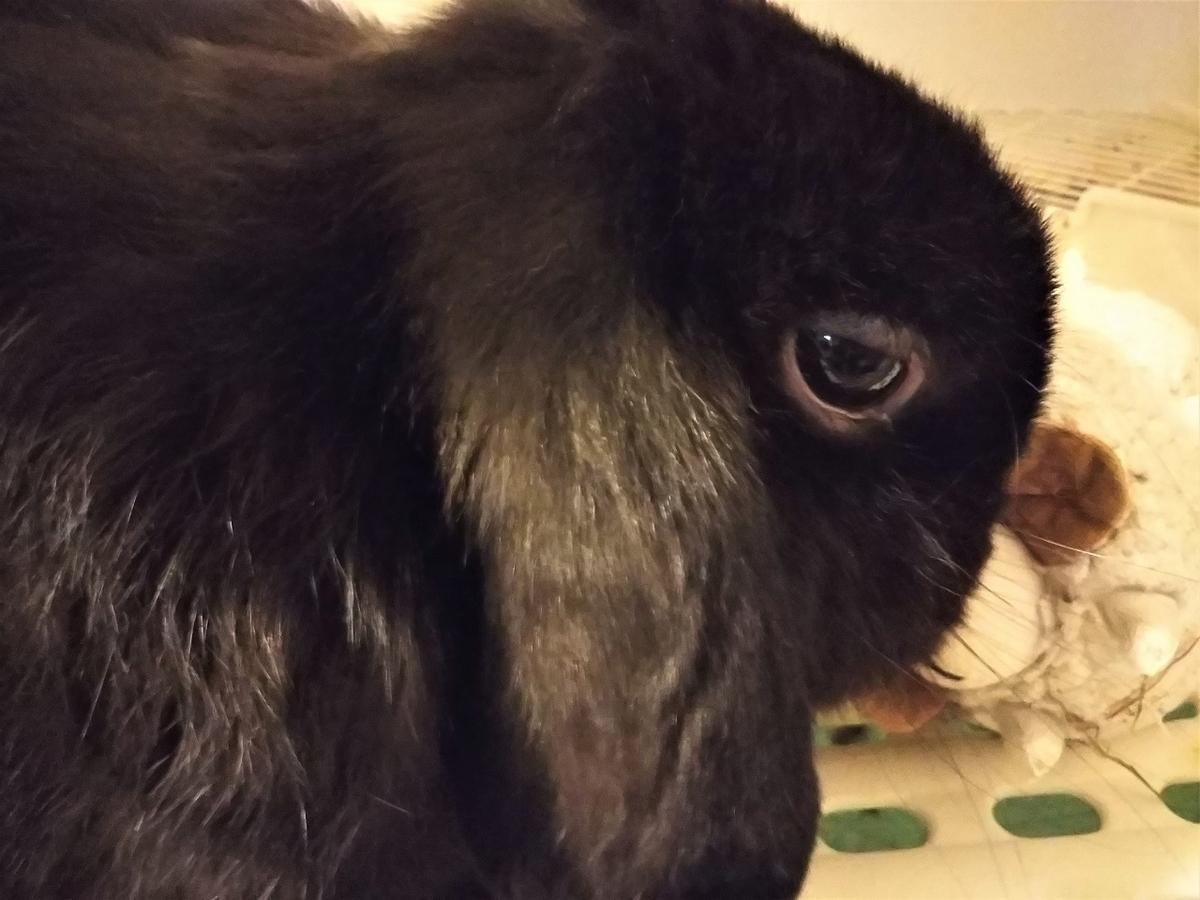 f:id:Ponz-rabbit:20191025212702j:plain