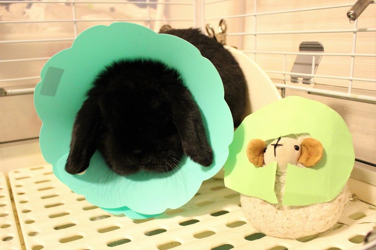 f:id:Ponz-rabbit:20191108212806j:plain