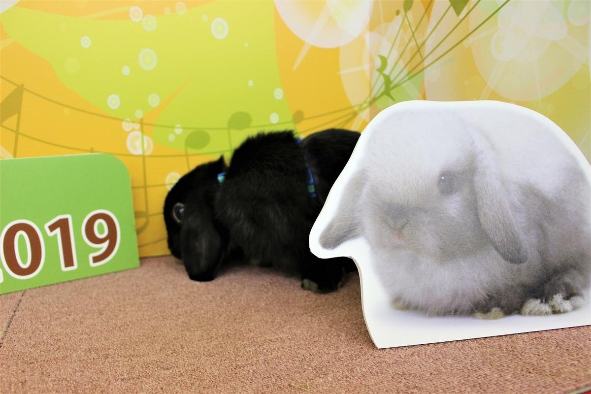 f:id:Ponz-rabbit:20191123213144j:plain