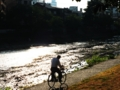 [川][自転車]川辺を 走る