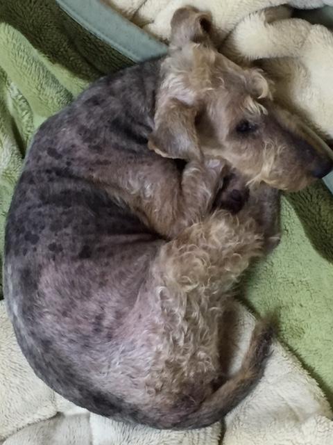 f:id:Powerful-terrier:20160722190534j:plain