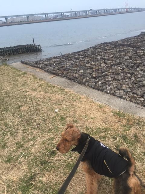 f:id:Powerful-terrier:20170305212438j:plain