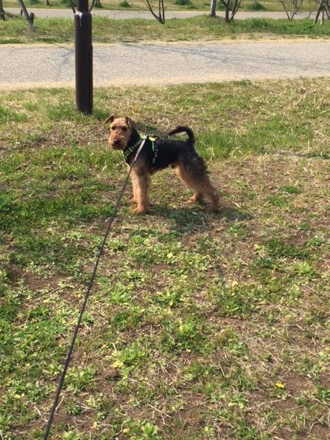 f:id:Powerful-terrier:20170319152855j:plain