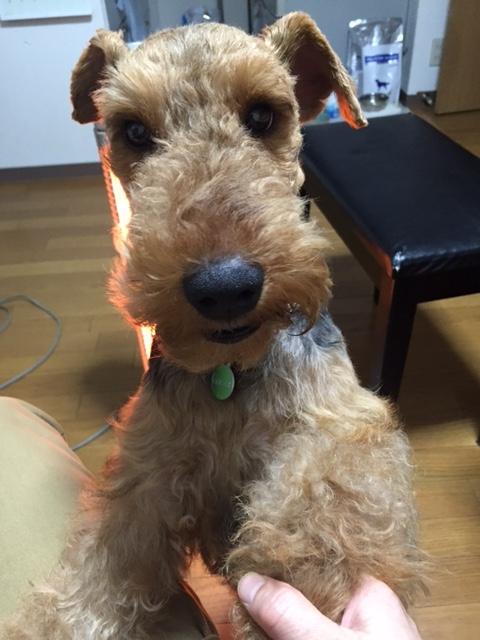 f:id:Powerful-terrier:20170319154641j:plain