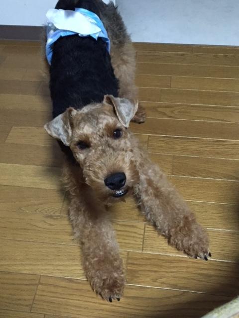 f:id:Powerful-terrier:20170702173840j:plain