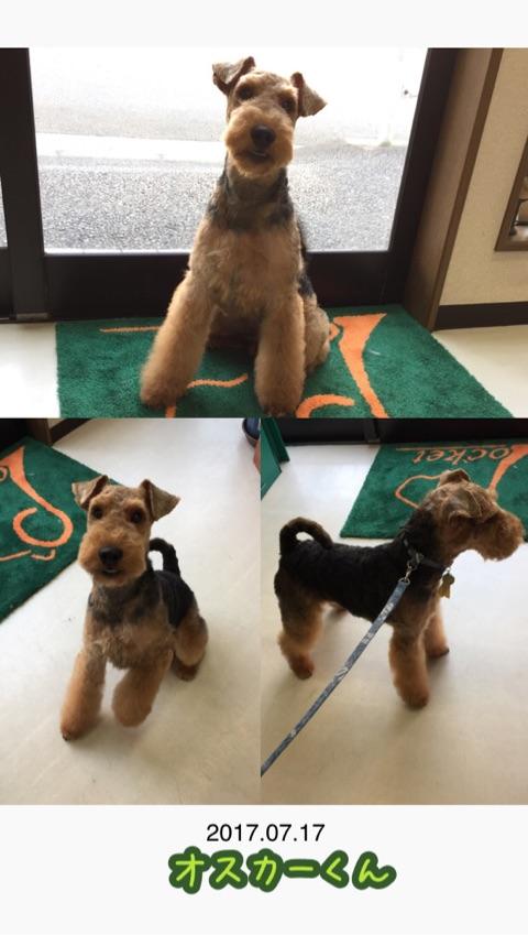 f:id:Powerful-terrier:20170718160748j:plain