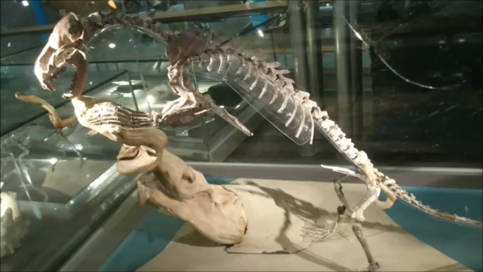 f:id:Prehistoriclifeman:20200415213259p:plain