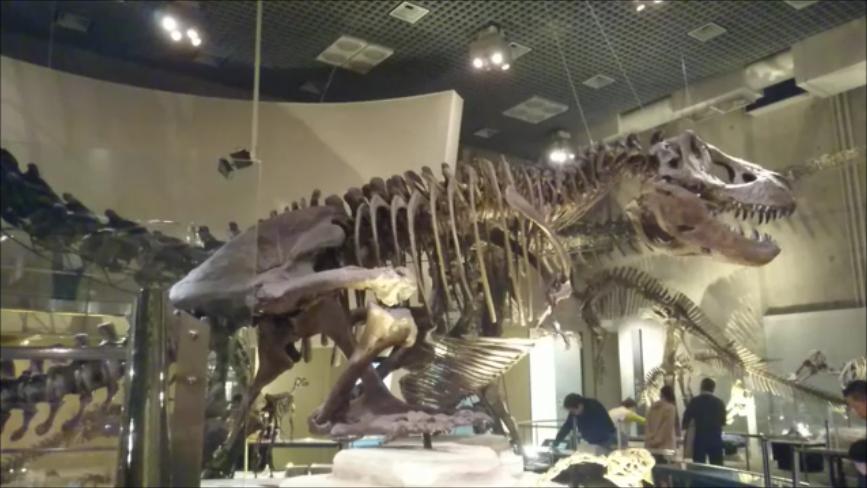 f:id:Prehistoriclifeman:20200425234251p:plain