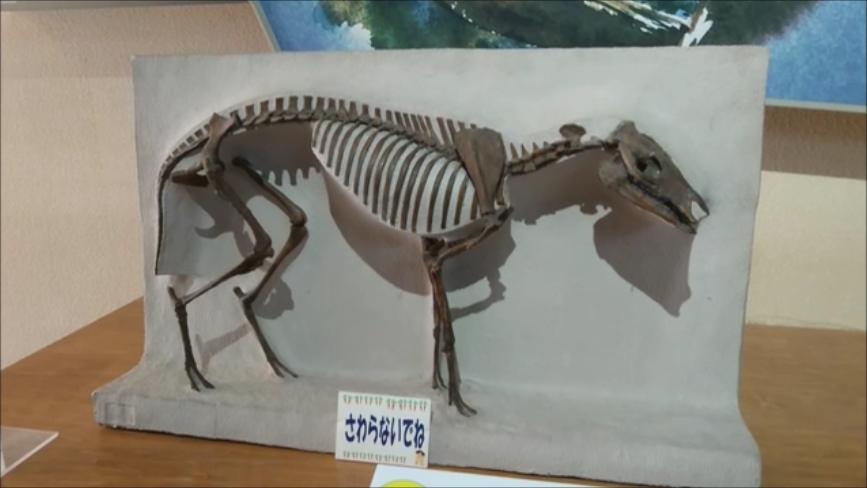 f:id:Prehistoriclifeman:20200426155617p:plain