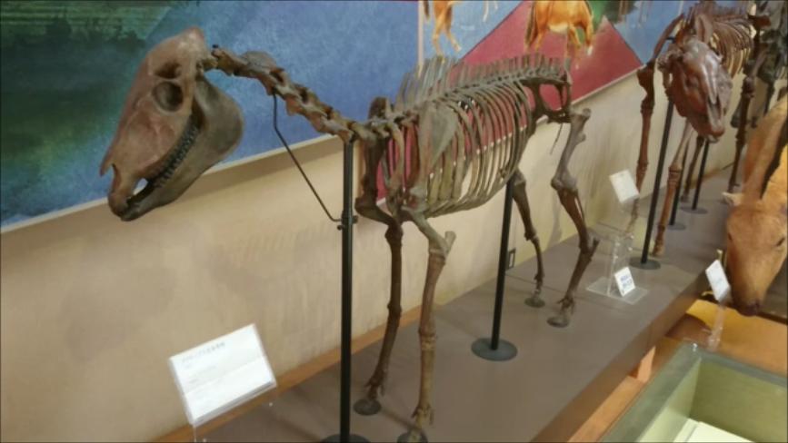 f:id:Prehistoriclifeman:20200426160157p:plain