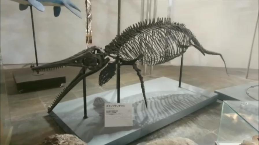 f:id:Prehistoriclifeman:20200522224701p:plain