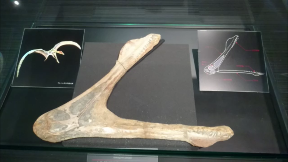 f:id:Prehistoriclifeman:20200812093044p:plain