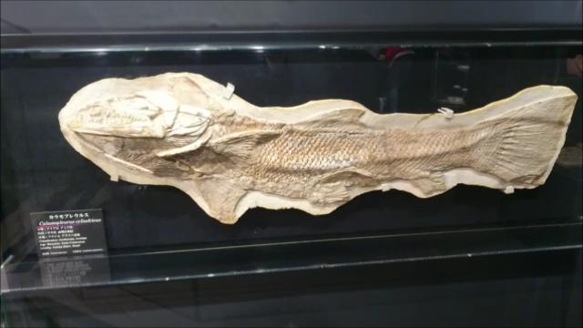f:id:Prehistoriclifeman:20200926103304p:plain