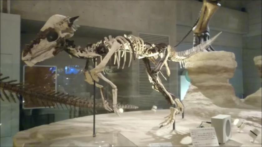 f:id:Prehistoriclifeman:20201011064444p:plain