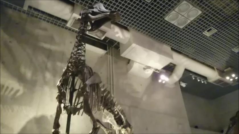 f:id:Prehistoriclifeman:20201011064512p:plain