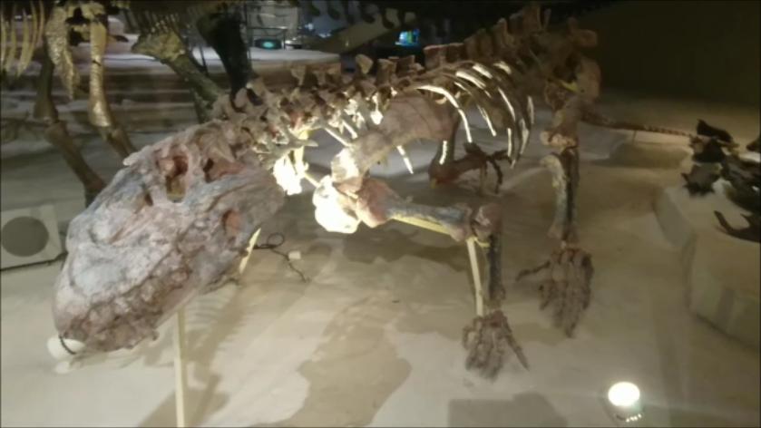 f:id:Prehistoriclifeman:20201011065339p:plain