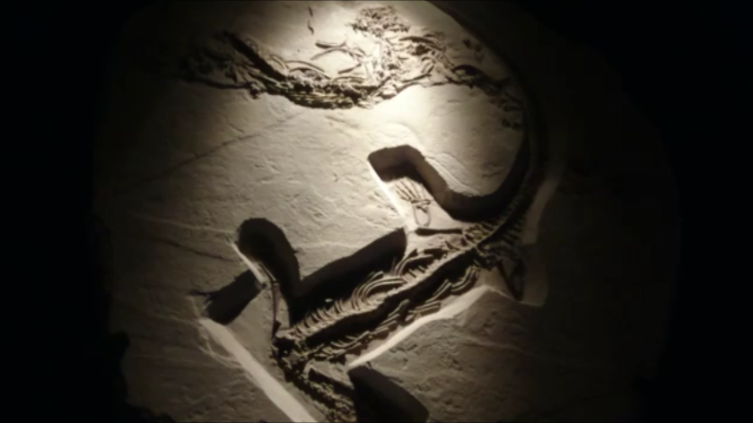 f:id:Prehistoriclifeman:20201012230345p:plain