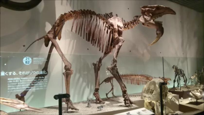 f:id:Prehistoriclifeman:20201014220736p:plain