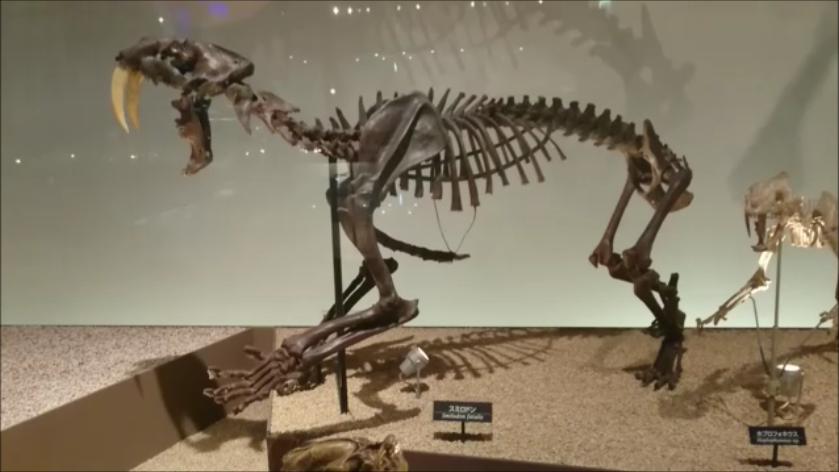 f:id:Prehistoriclifeman:20201014221718p:plain
