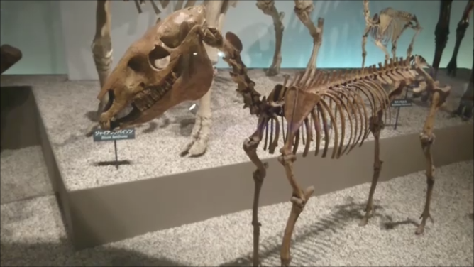 f:id:Prehistoriclifeman:20201107132127p:plain