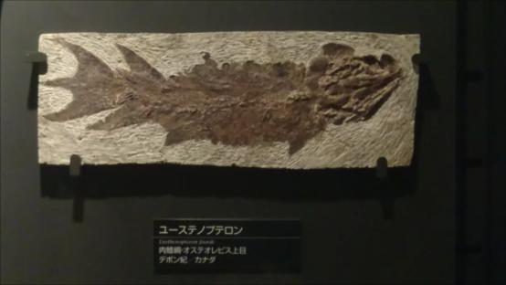 f:id:Prehistoriclifeman:20201110222008p:plain