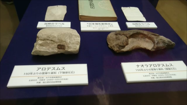 f:id:Prehistoriclifeman:20201231074750p:plain