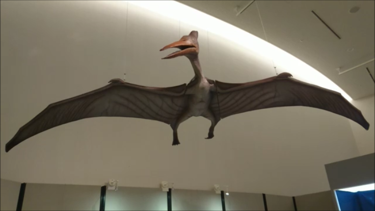 f:id:Prehistoriclifeman:20210101093313p:plain